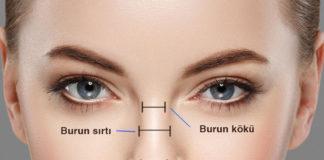 burun anatomisi